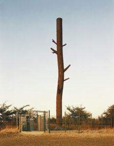 mobile-phone-masts-tree-photographs-1